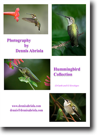 Boxed Hummingbird Collection
